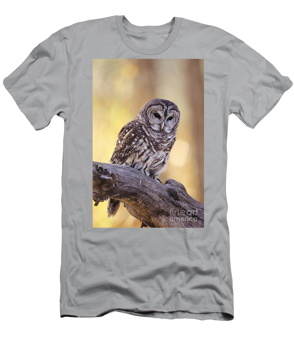 Animal Art Men's T-Shirt (Athletic Fit) featuring the photograph Barred Owl by John Hyde - Printscapes