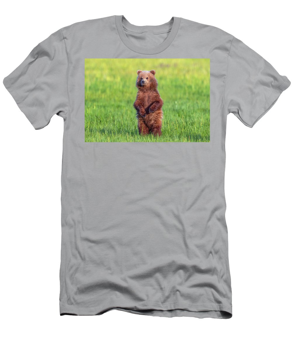 Alaska Men's T-Shirt (Athletic Fit) featuring the photograph Bear Standing Tall by Mike Centioli