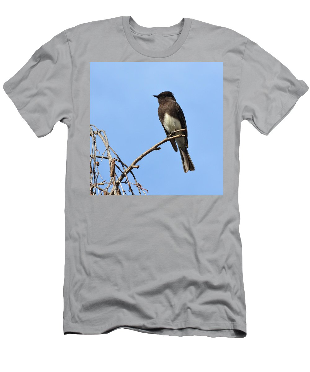 Phoebe Men's T-Shirt (Athletic Fit) featuring the photograph Black Phoebe 2 by David Hohmann