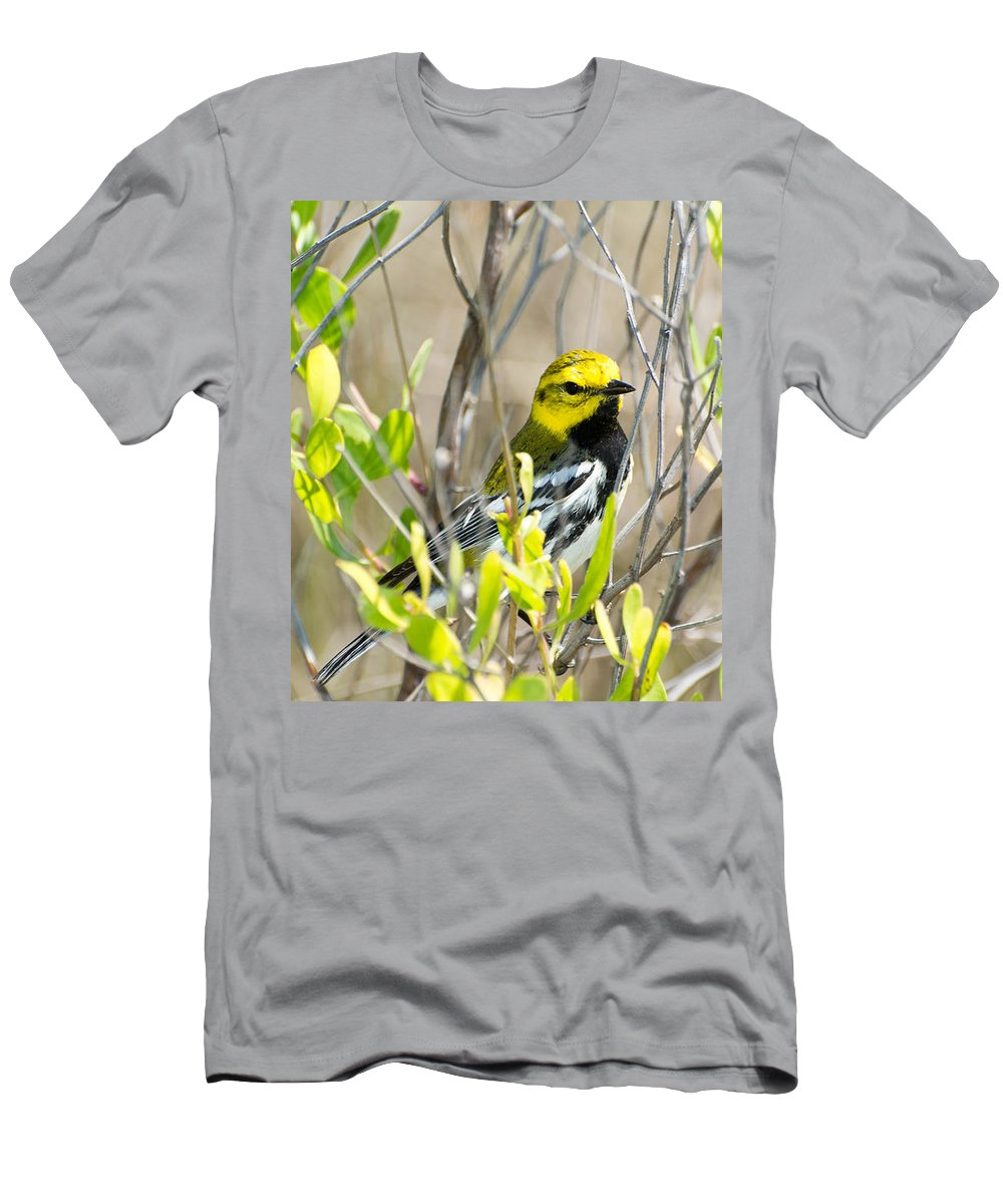 Black-throated Green Warbler Men's T-Shirt (Athletic Fit) featuring the photograph Black-throated Green Warbler by Royal Tyler
