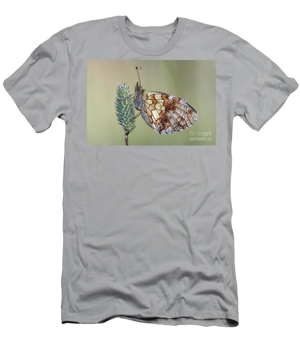 Macro Men's T-Shirt (Athletic Fit) featuring the photograph Butterfly - Meadow Satyrid by Michal Boubin