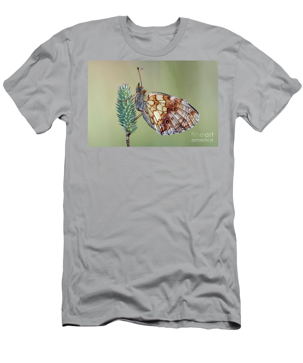 Insect Men's T-Shirt (Athletic Fit) featuring the photograph Butterfly On The Grass by Michal Boubin
