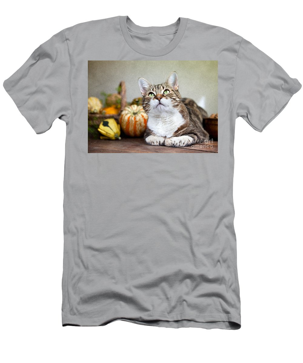 Cat Men's T-Shirt (Athletic Fit) featuring the painting Cat And Pumpkins by Nailia Schwarz