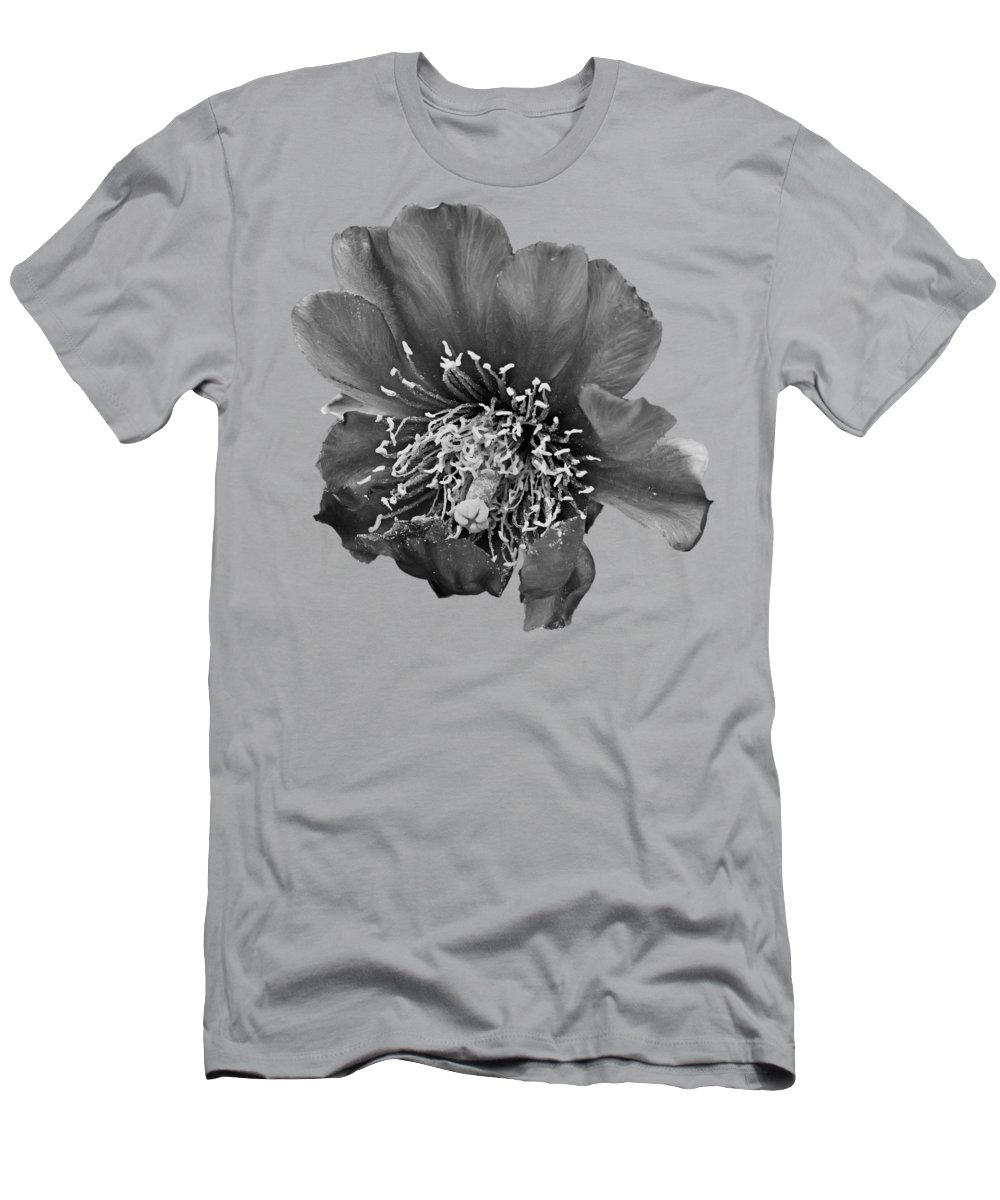 Desert Flora Photographs T-Shirts