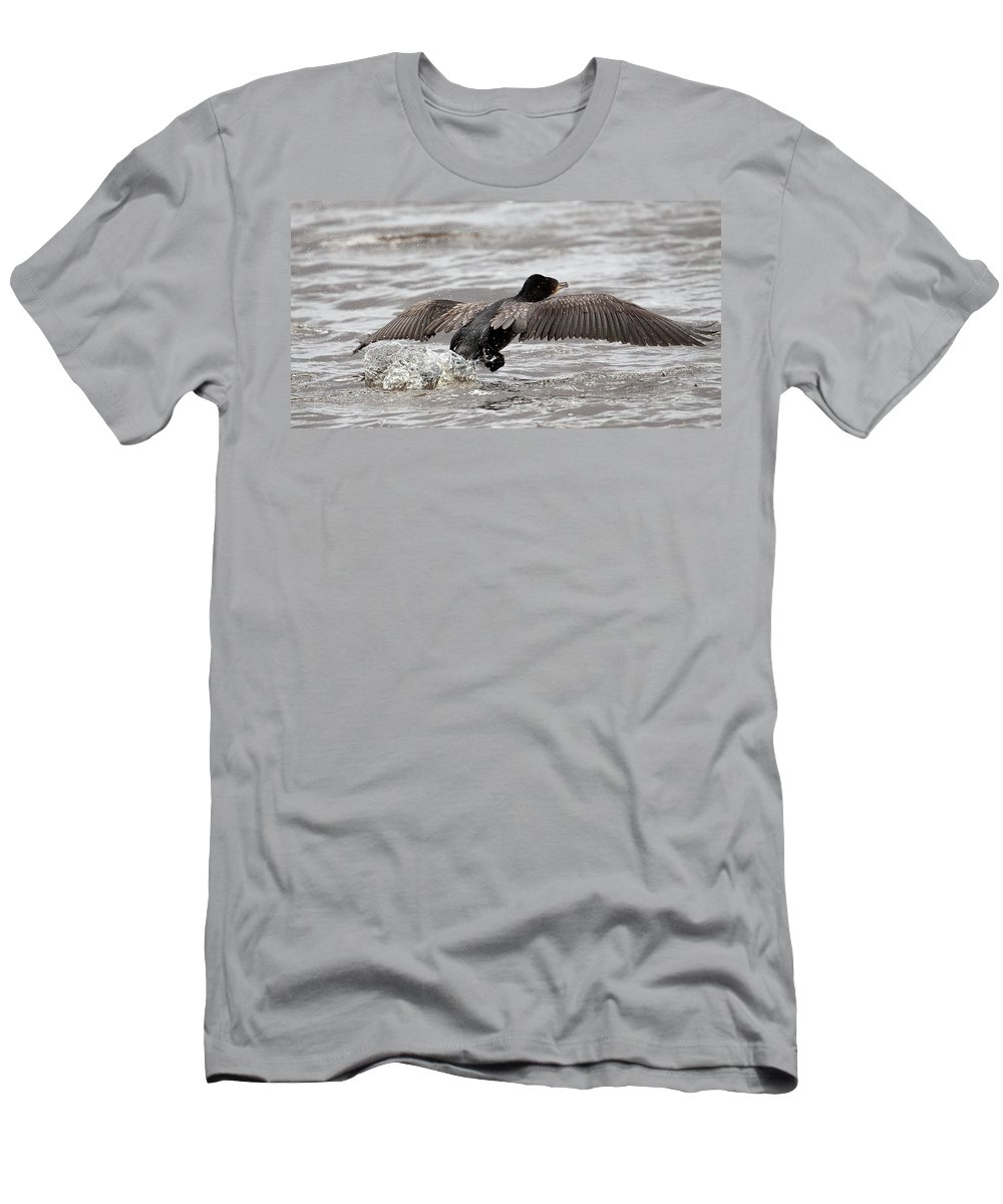 Bird Men's T-Shirt (Athletic Fit) featuring the photograph Cormorant Taking To The Air by Bob Kemp
