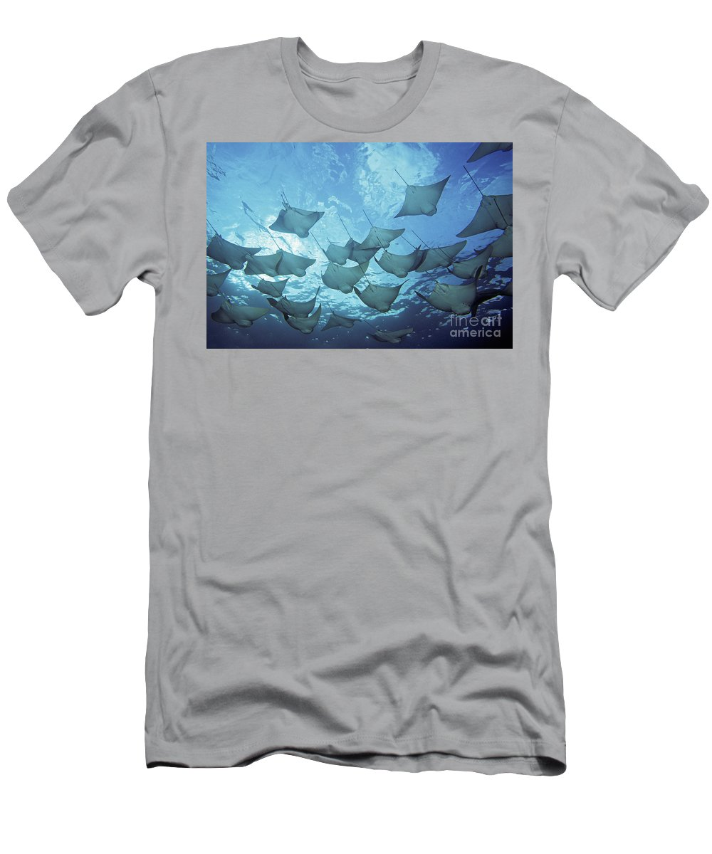 Animal Art Men's T-Shirt (Athletic Fit) featuring the photograph Cownose Rays by Dave Fleetham - Printscapes