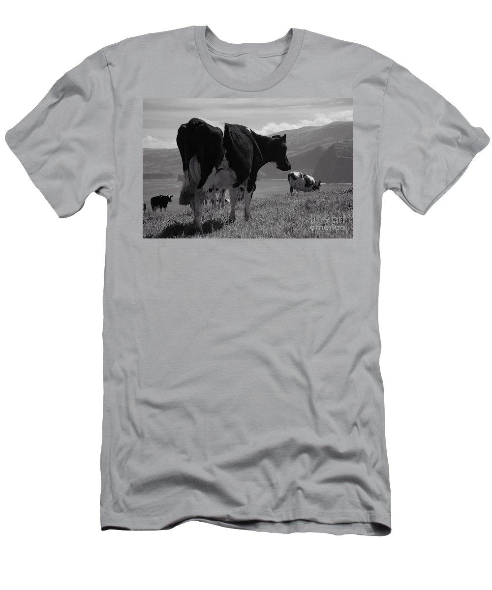 Azoren Men's T-Shirt (Athletic Fit) featuring the photograph Cows by Gaspar Avila