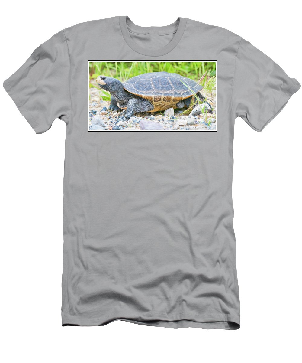 Diamondback Terrapin Men's T-Shirt (Athletic Fit) featuring the photograph Diamondback Terrapin by A Gurmankin
