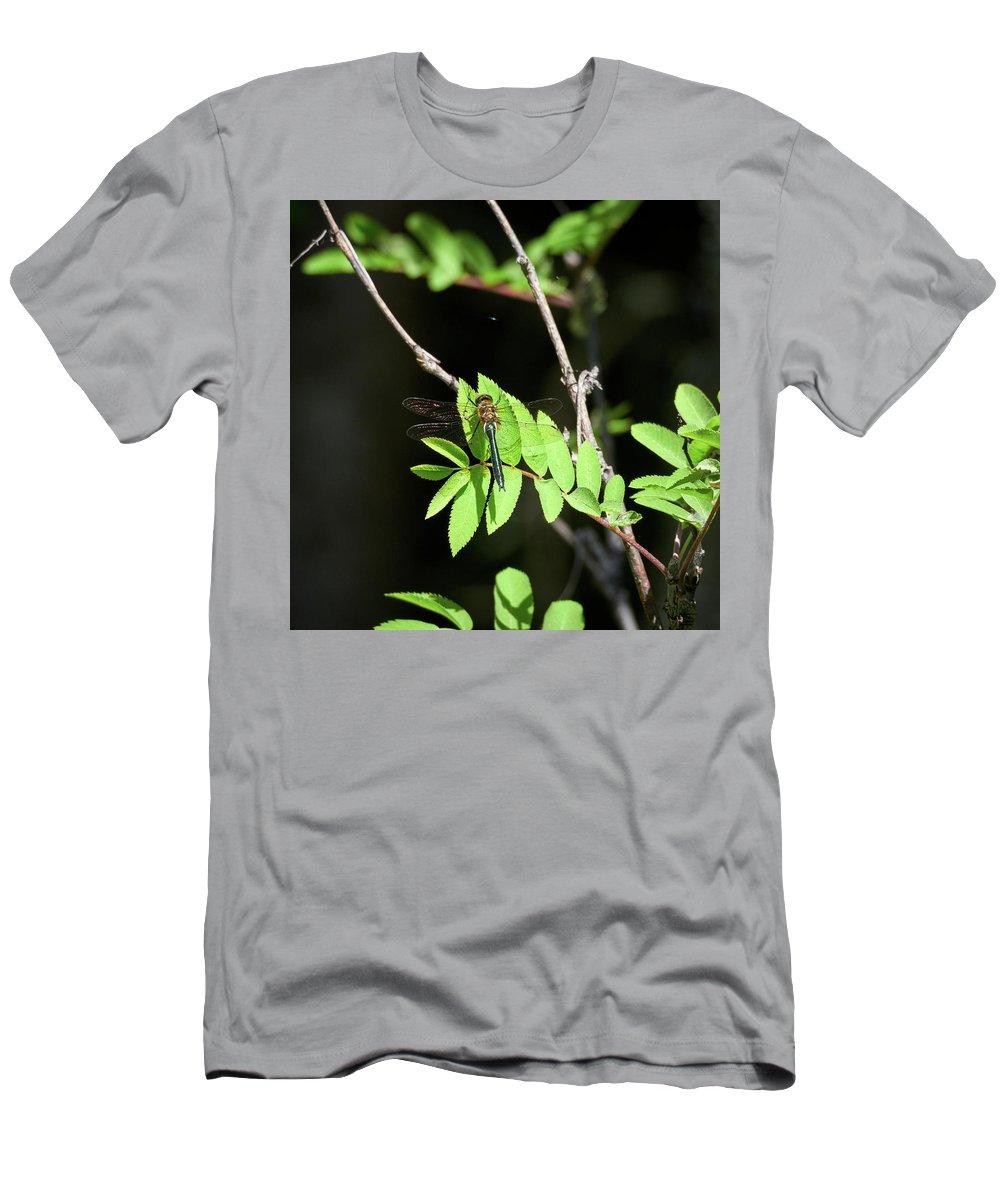 Cordulia Aenea Men's T-Shirt (Athletic Fit) featuring the photograph Downy Emerald by Jouko Lehto