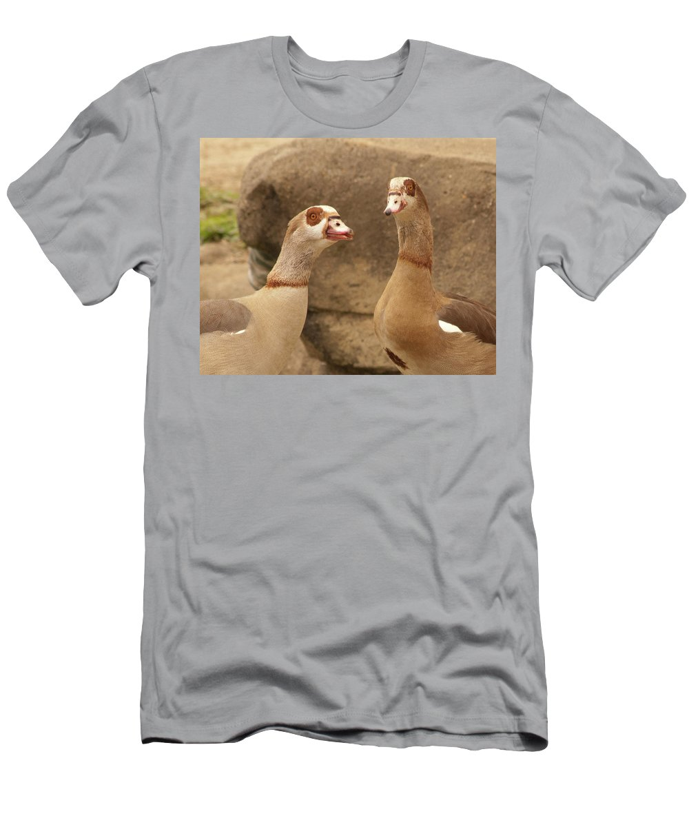 Birthday Men's T-Shirt (Athletic Fit) featuring the photograph Egyptian Goose by Diane Schuler