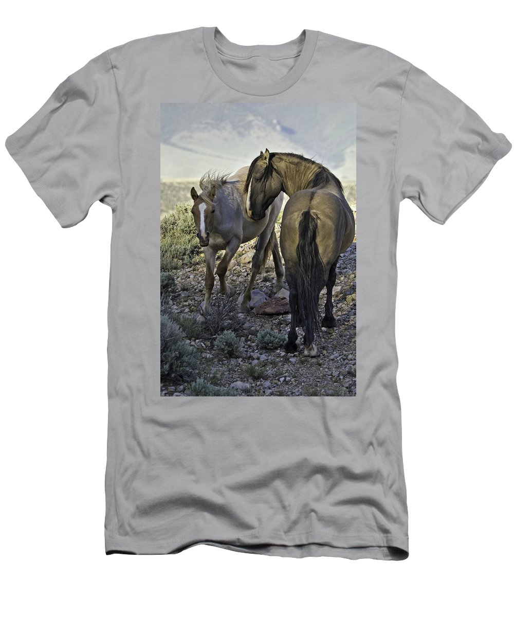 Barb Horse Men's T-Shirt (Athletic Fit) featuring the photograph Father And Son by Richard Rivard