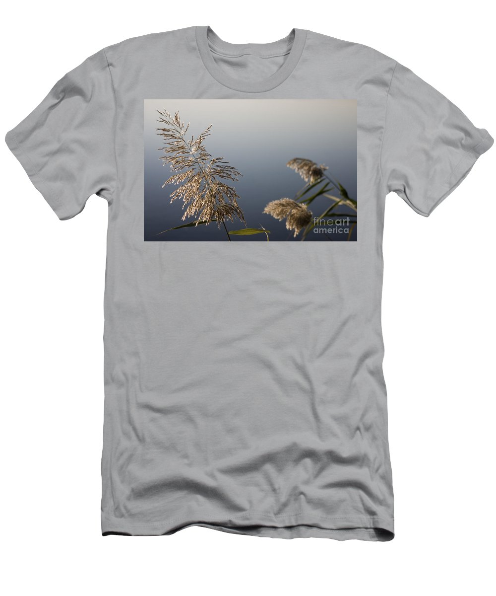 Nature Men's T-Shirt (Athletic Fit) featuring the photograph Flowering Cane Plant by Nahum Budin