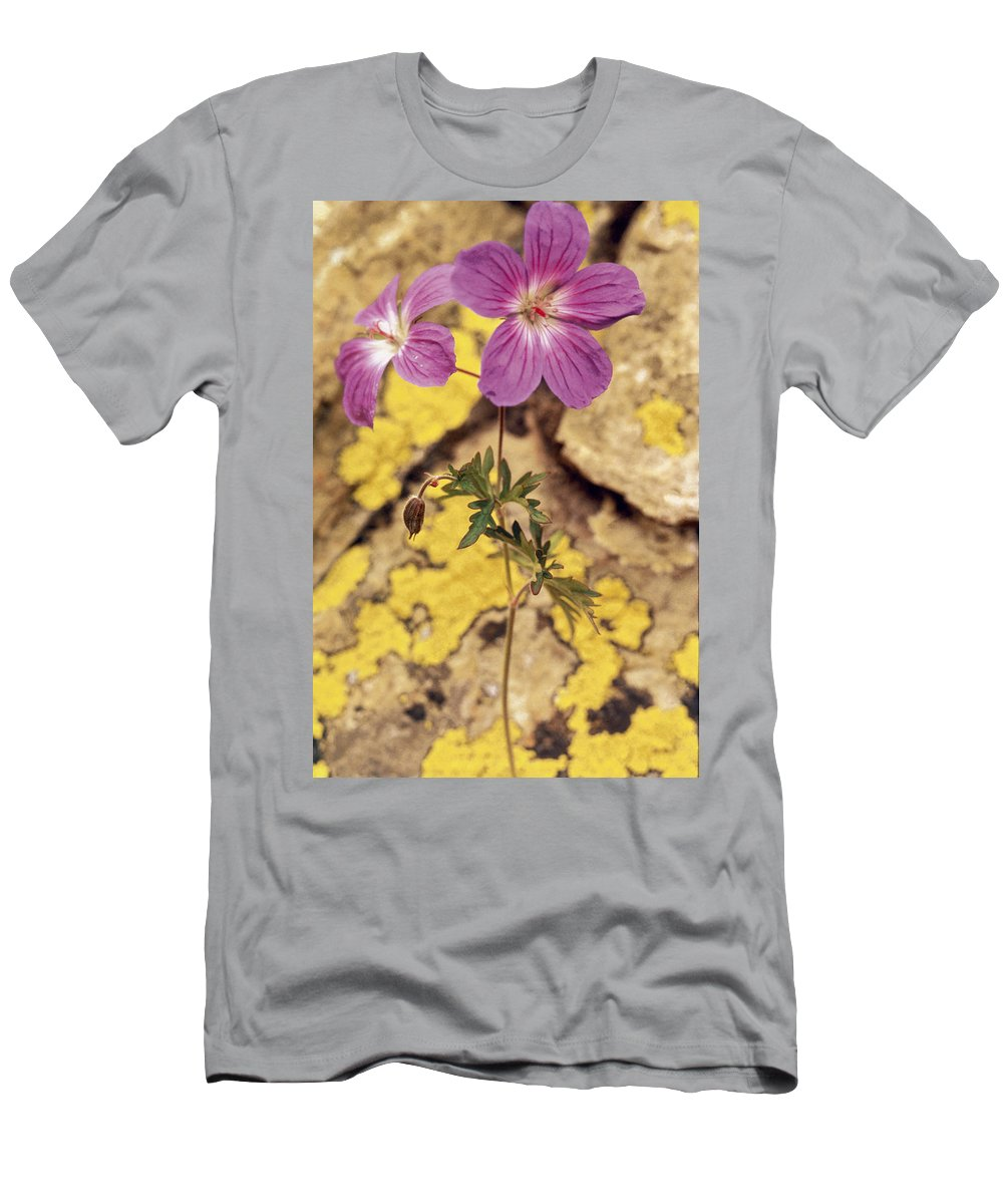 Bloom; Blossom; Close-ups; Exotic; Flowers; Indian; Flower; Lavender; Purple; Nectar; Petal; Petals; Pollen; Actinomorphic; Symmetrical; Geranium Men's T-Shirt (Athletic Fit) featuring the photograph Geranium by American School