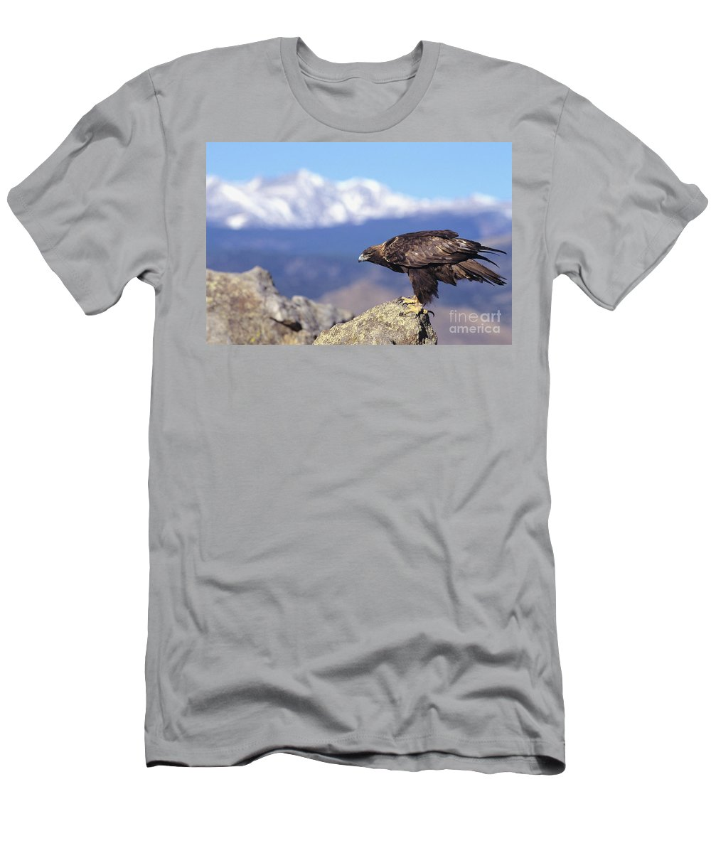 Animal Art Men's T-Shirt (Athletic Fit) featuring the photograph Golden Eagle by John Hyde - Printscapes