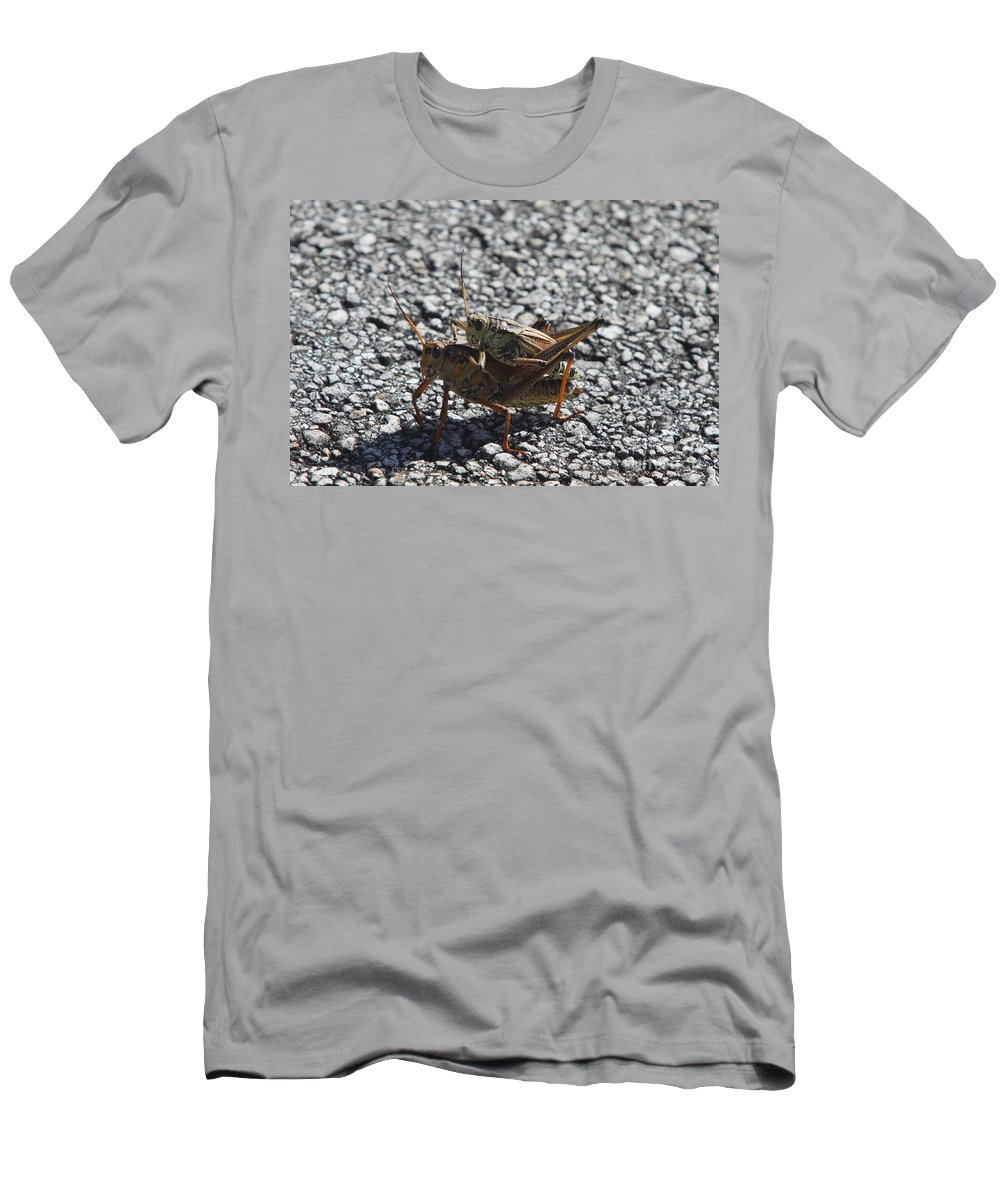 Bugs Men's T-Shirt (Athletic Fit) featuring the photograph Grasshoper Love by Christiane Schulze Art And Photography
