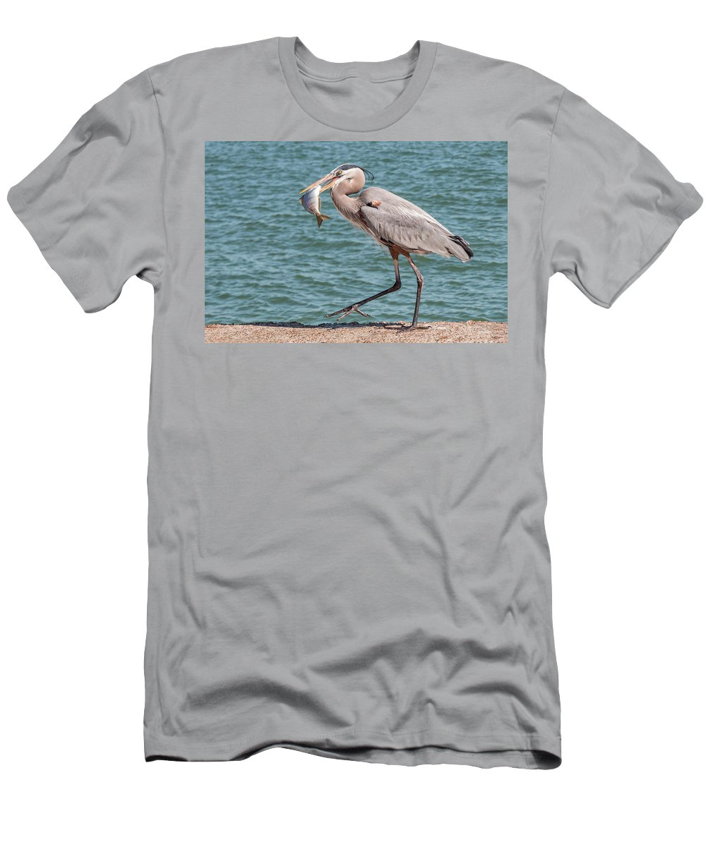 Bird Men's T-Shirt (Athletic Fit) featuring the photograph Great Blue Heron Walking With Fish #4 by Patti Deters