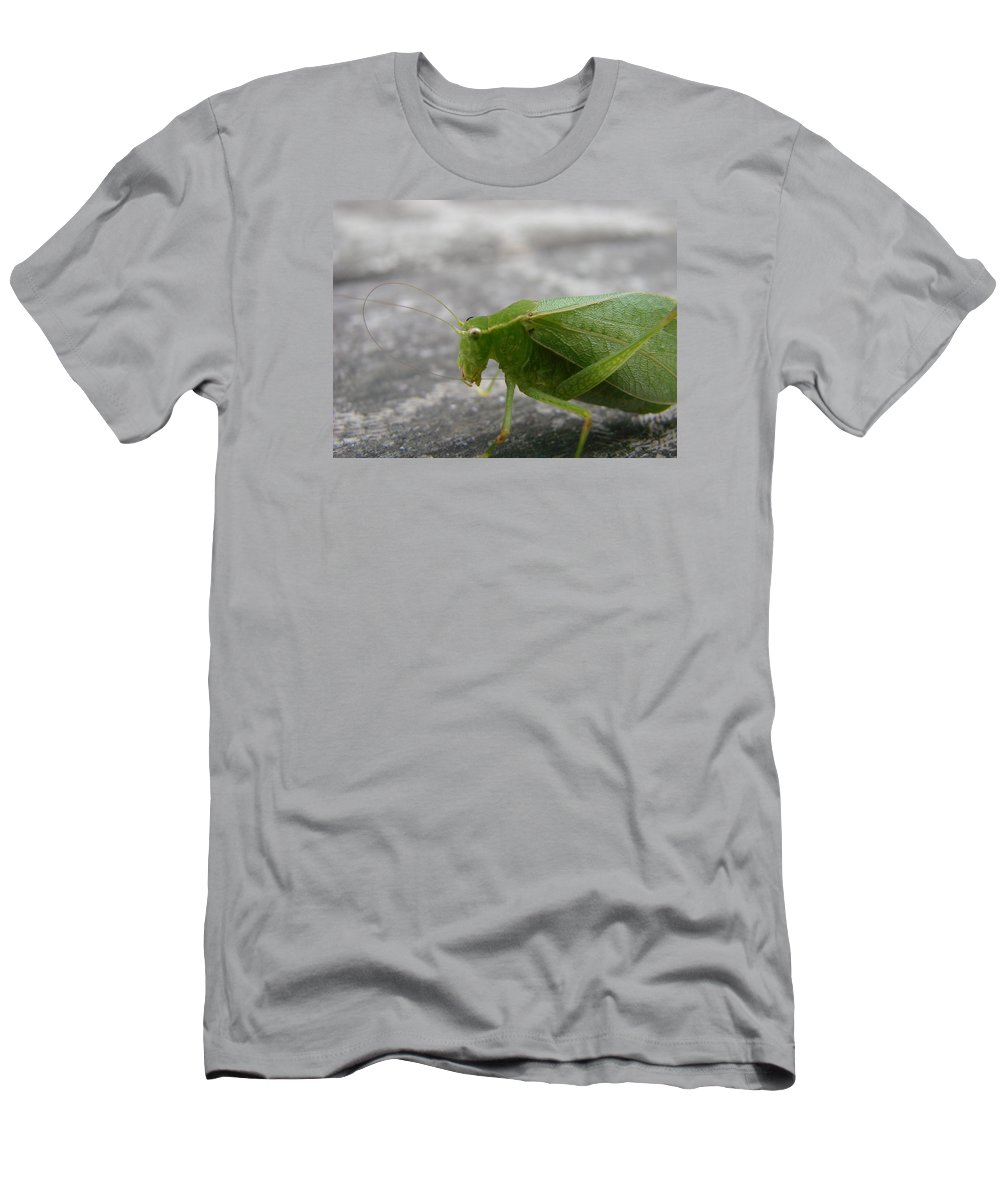 Bugs Men's T-Shirt (Athletic Fit) featuring the photograph Green Bug by Mary Halpin