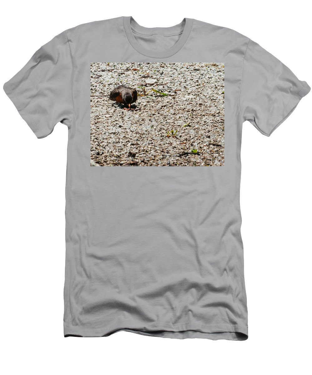 Heron Heaven Men's T-Shirt (Athletic Fit) featuring the photograph Grocery Shopping by Edward Peterson