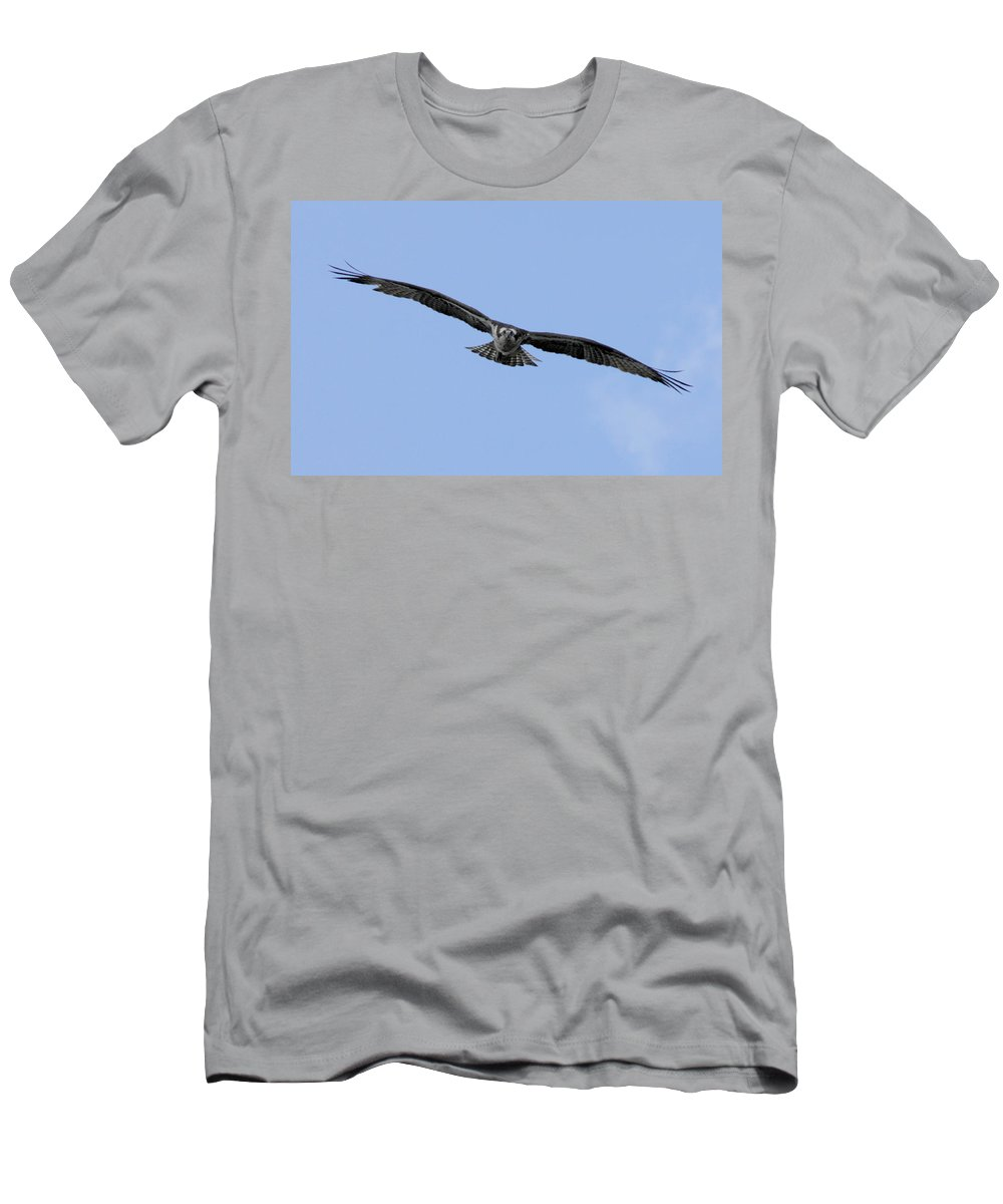 Bird Men's T-Shirt (Athletic Fit) featuring the photograph Head On by Donna Blackhall