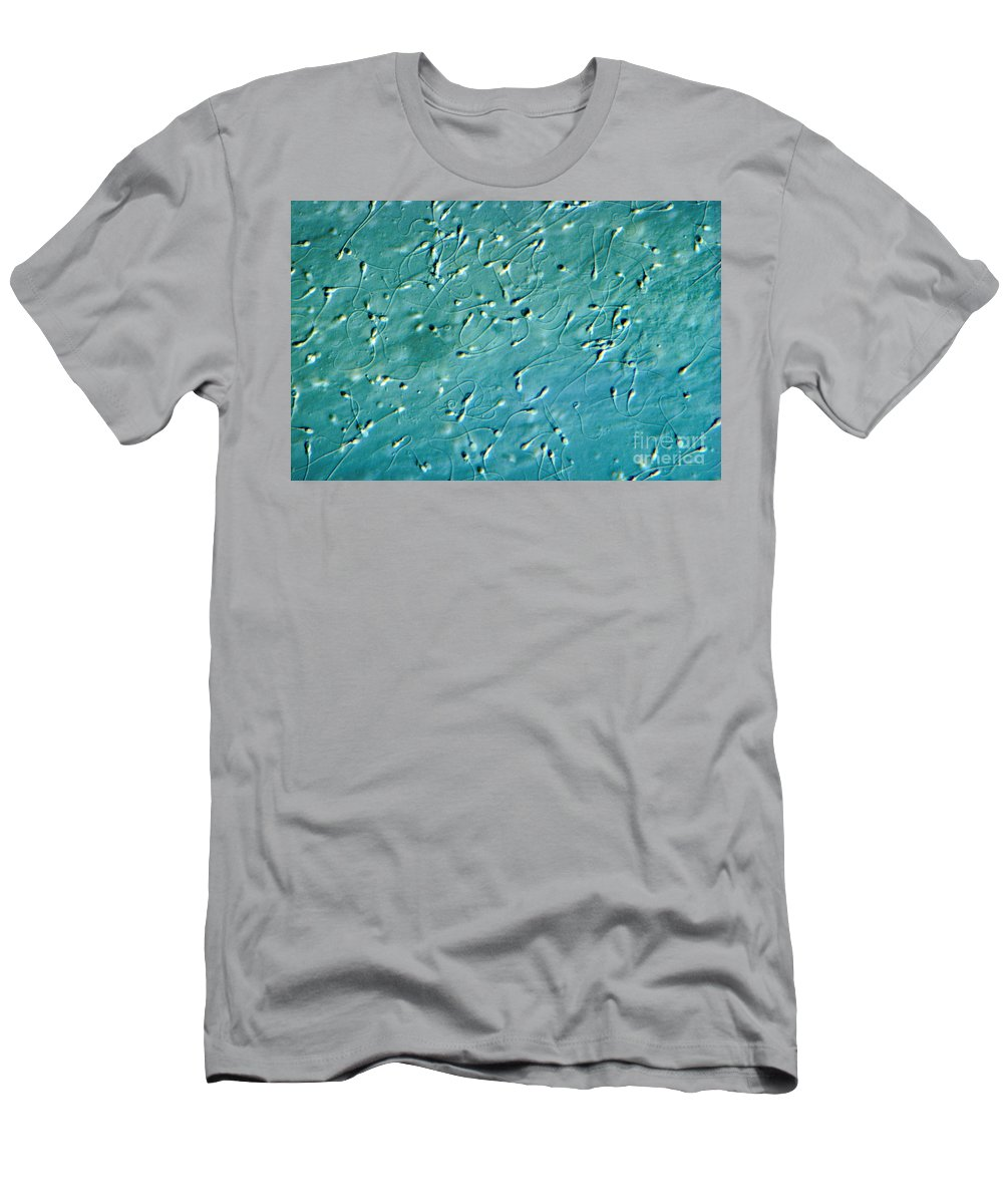 Differential Interference Contrast Microscopy Men's T-Shirt (Athletic Fit) featuring the photograph Human Sperm, Dic by M. I. Walker