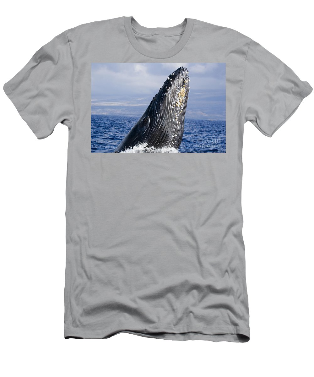 Above Men's T-Shirt (Athletic Fit) featuring the photograph Humpback Whale Breaching by Dave Fleetham - Printscapes