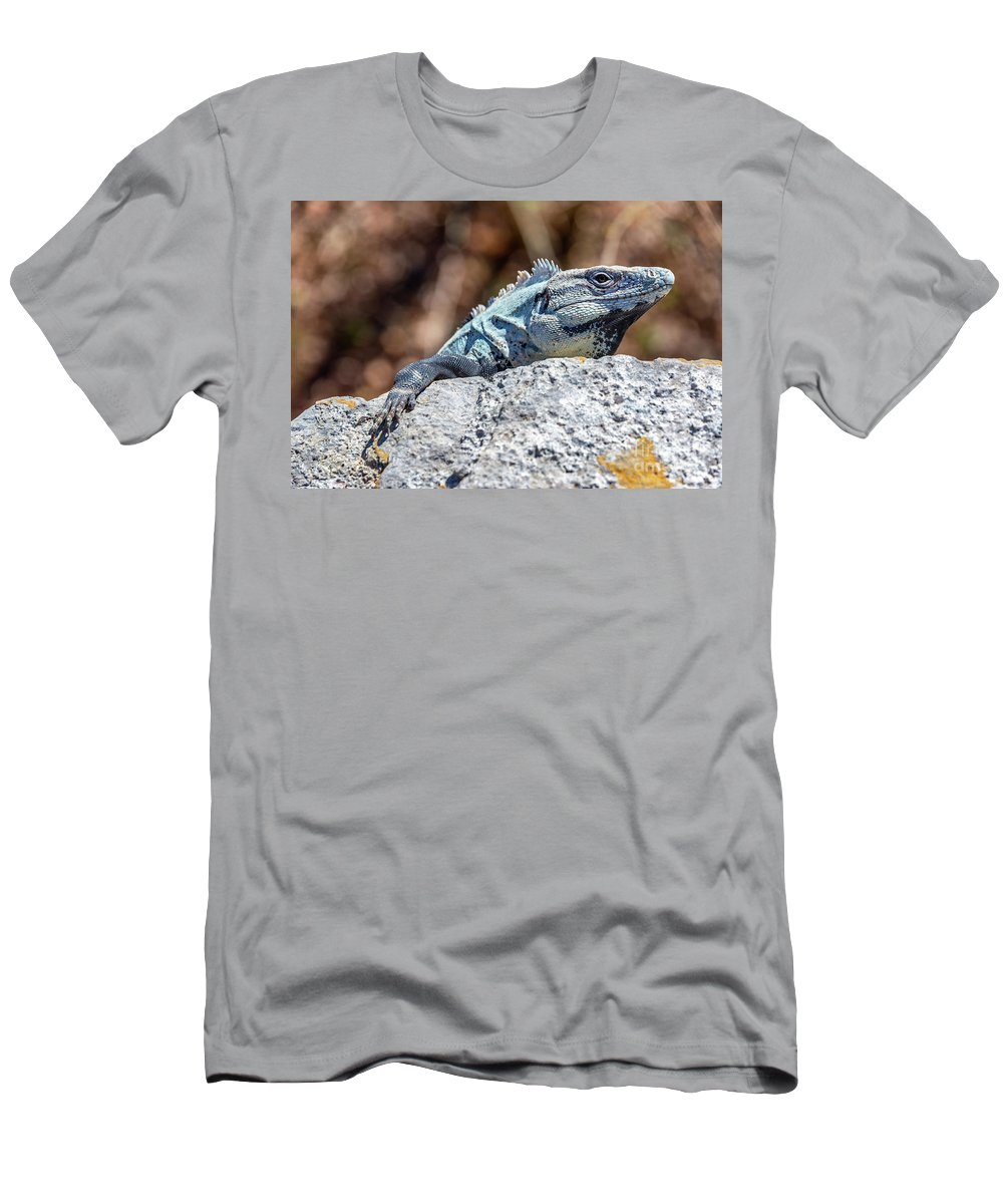 Balam Men's T-Shirt (Athletic Fit) featuring the photograph Iguana In Ek Balam by Jess Kraft