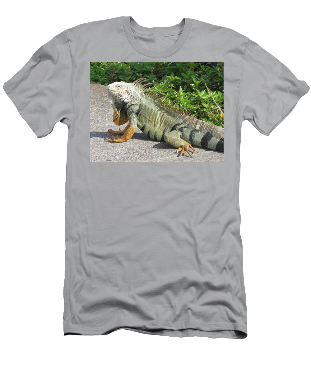 Iguania Men's T-Shirt (Athletic Fit) featuring the photograph Iguania Sunbathing by Christiane Schulze Art And Photography