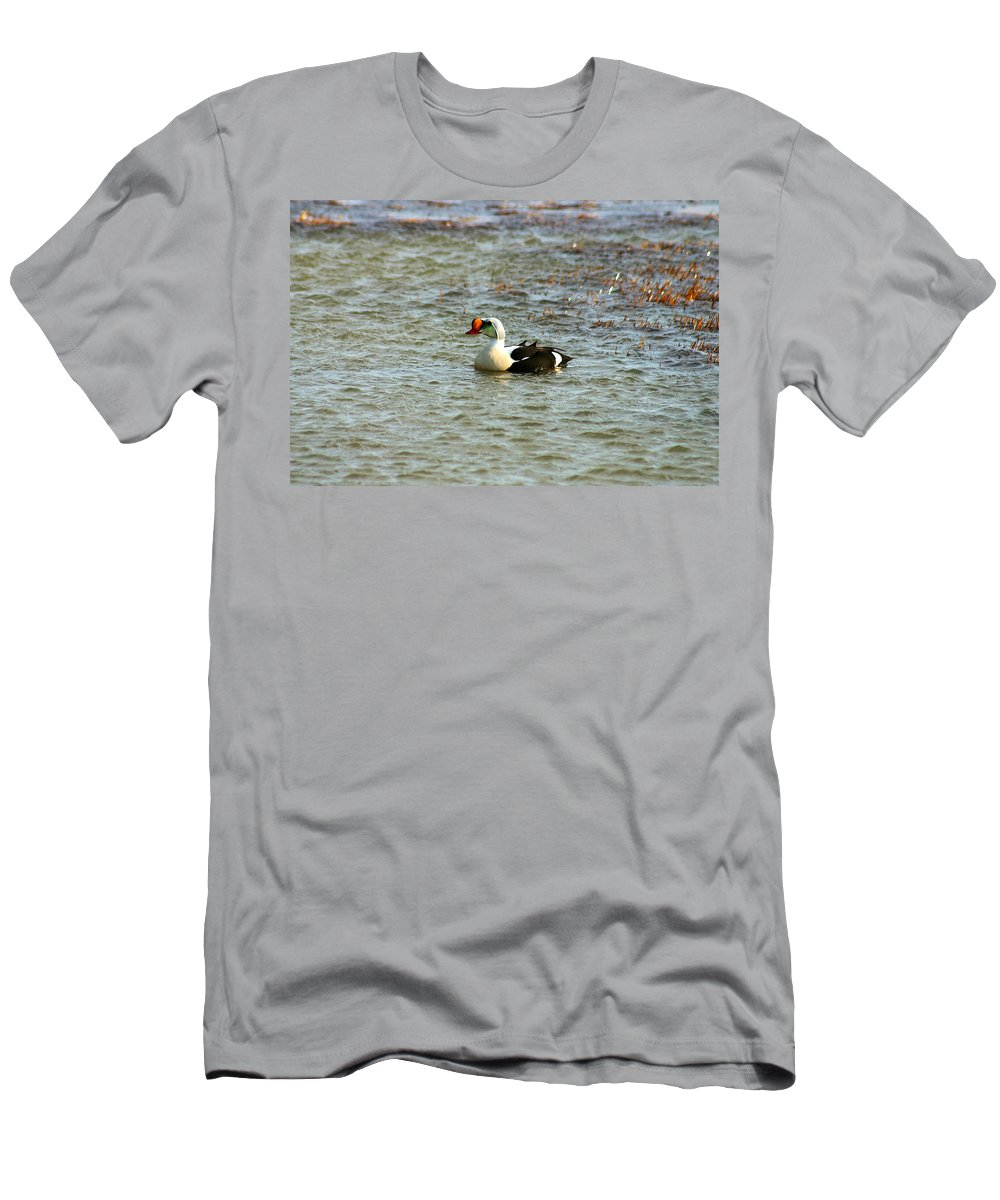 King Eider Men's T-Shirt (Athletic Fit) featuring the photograph King Eider by Anthony Jones