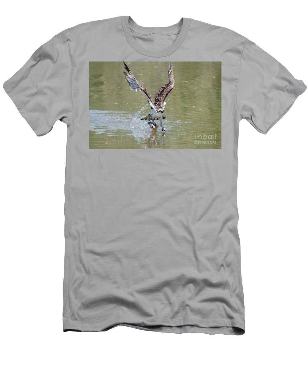 Osprey Men's T-Shirt (Athletic Fit) featuring the photograph Looking Good by Samuel Jokich