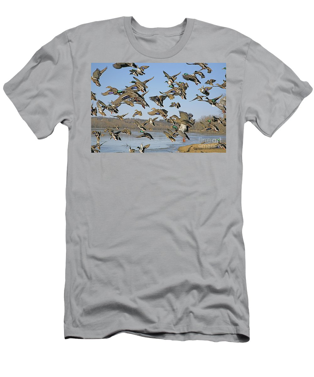 Nature Feather Men's T-Shirt (Athletic Fit) featuring the photograph Mad Rush by Robert Pearson