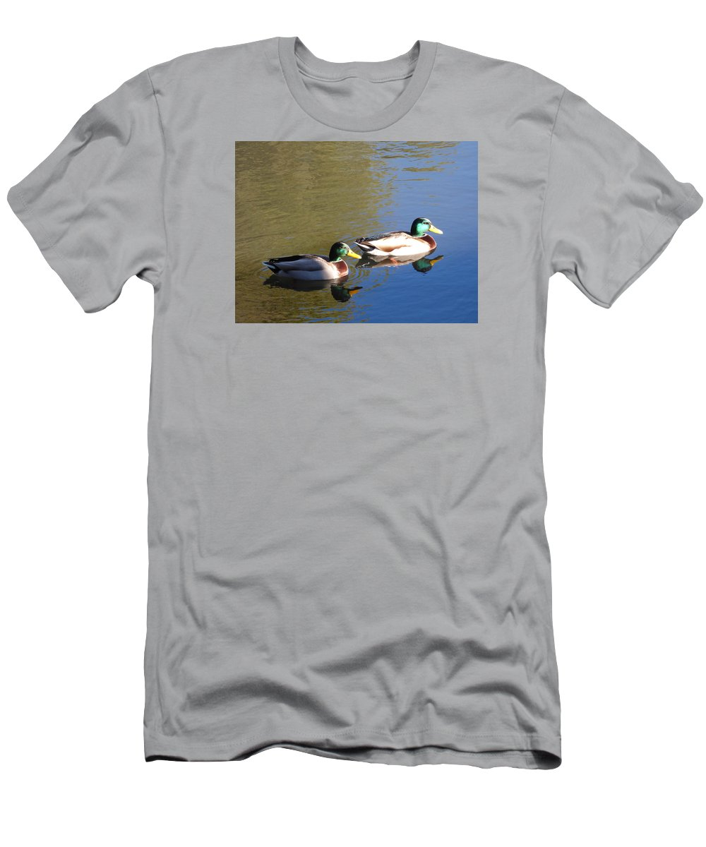 Mallard Drakes Men's T-Shirt (Athletic Fit) featuring the photograph Mallard Drakes In Morning Light by Andrea Freeman
