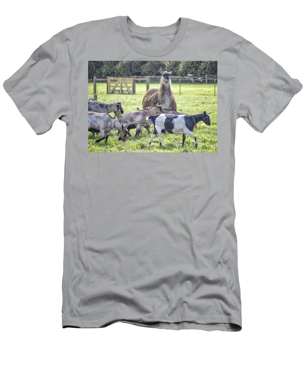 Llama And Herd Of Goats Men's T-Shirt (Athletic Fit) featuring the photograph Mama Llama by Ellen Berrahmoun