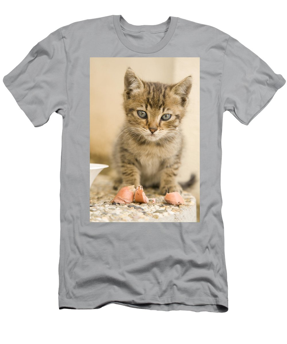 Kitten Men's T-Shirt (Athletic Fit) featuring the photograph Mmmm Love Eating Frankfurters by Ian Middleton