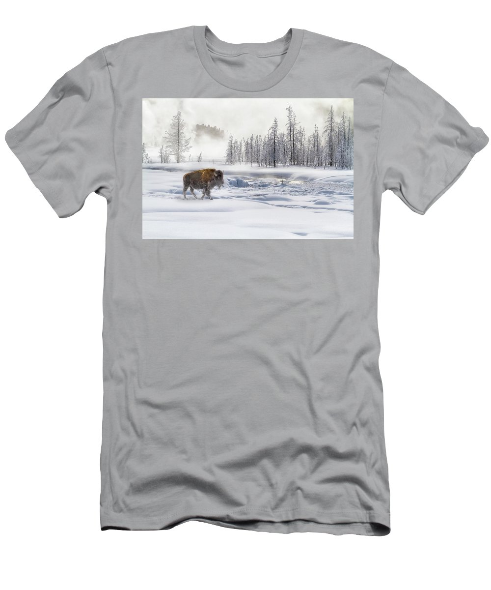 Yellowstone Men's T-Shirt (Athletic Fit) featuring the photograph Morning Bison 4 7912-4 by Karen Celella