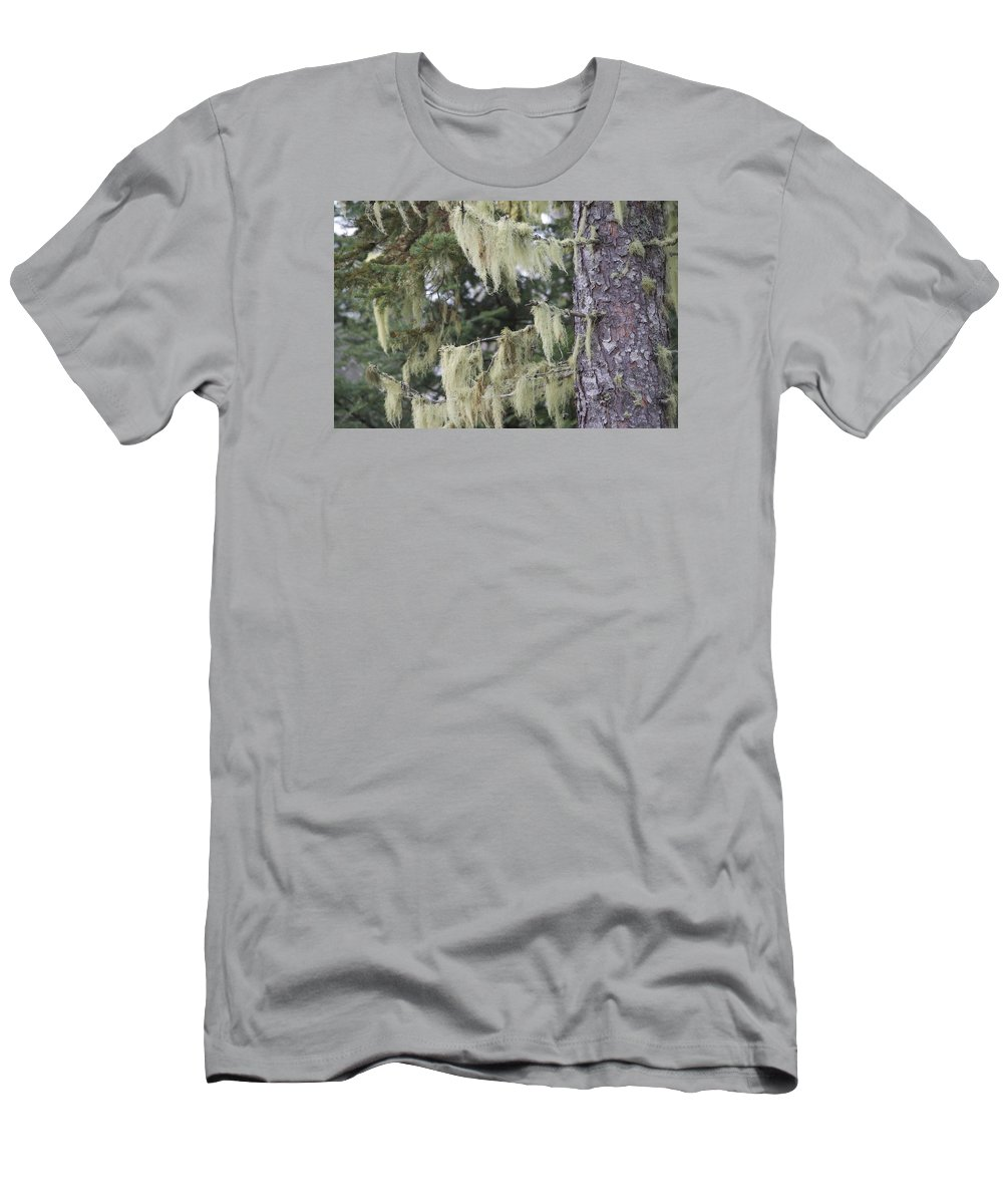Moss Men's T-Shirt (Athletic Fit) featuring the photograph Moss On Pine by Hella Buchheim