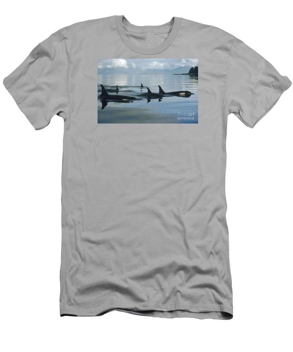 00079478 Men's T-Shirt (Athletic Fit) featuring the photograph Orca Pod Johnstone Strait Canada by Flip Nicklin
