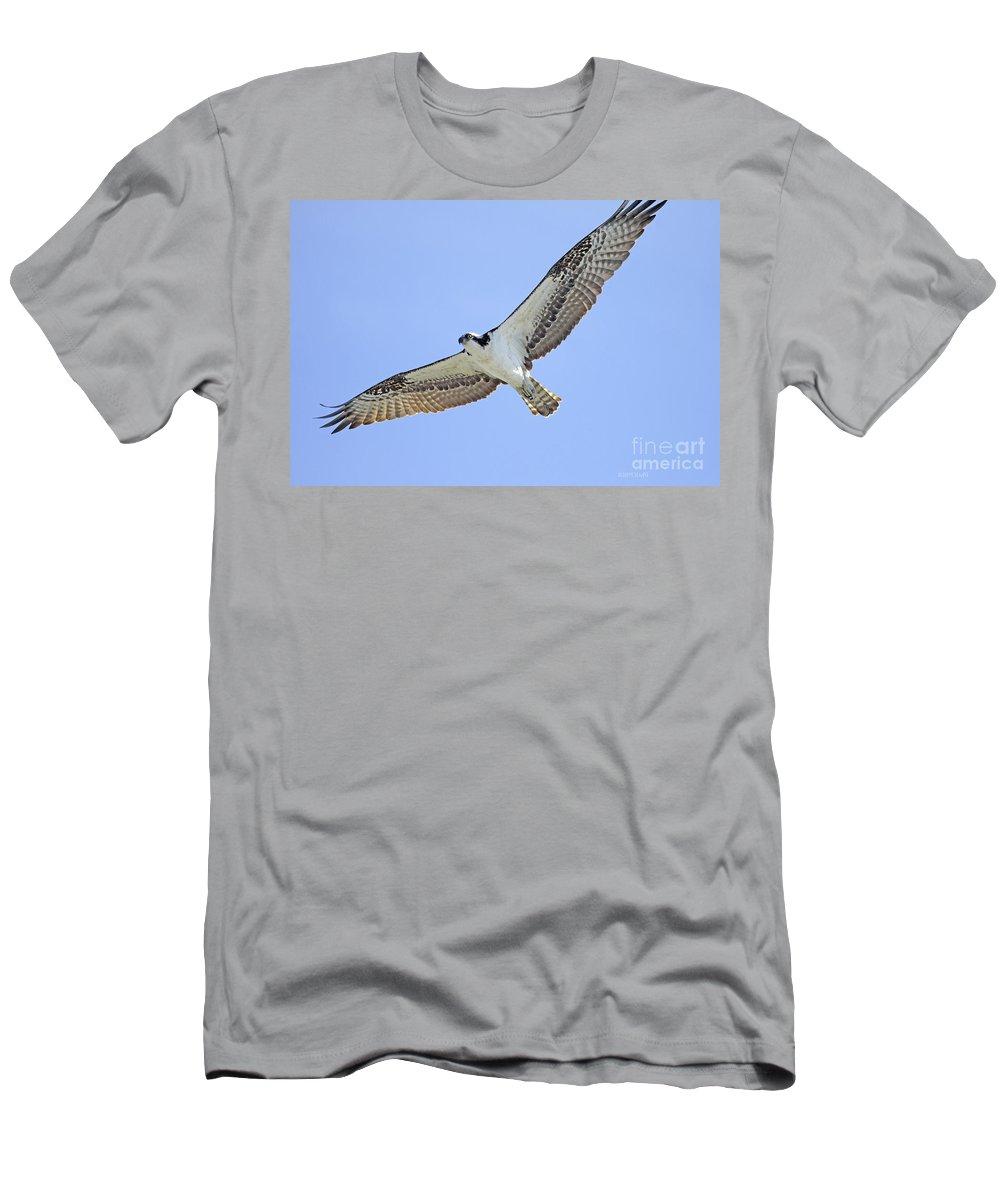 Osprey Men's T-Shirt (Athletic Fit) featuring the photograph Osprey 1-30-11 by Deborah Benoit