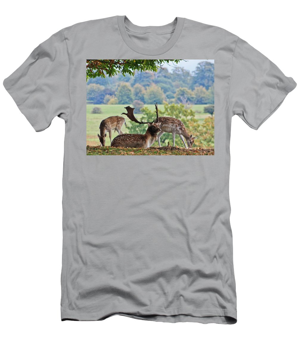 Deer Men's T-Shirt (Athletic Fit) featuring the photograph Peace And Quiet by Dawn OConnor