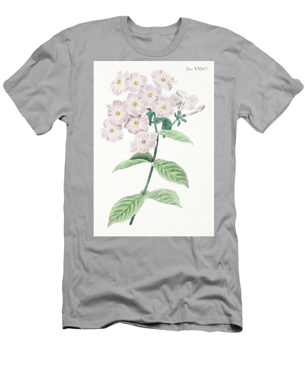 Phlox Acuminata Men's T-Shirt (Athletic Fit) featuring the drawing Phlox Acuminata by Italian School