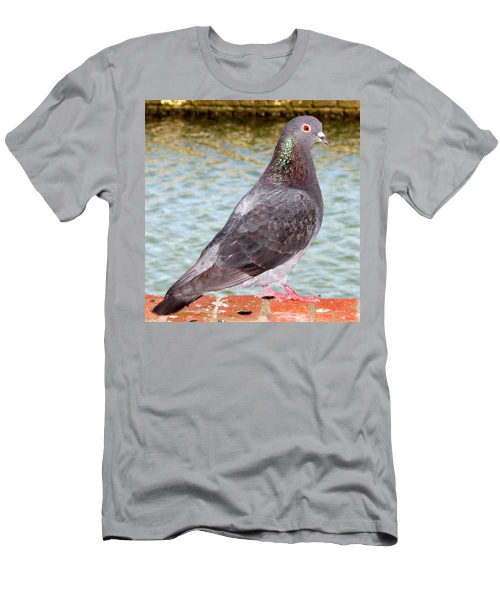 Pigeon Men's T-Shirt (Athletic Fit) featuring the photograph Pigeon by J M Farris Photography