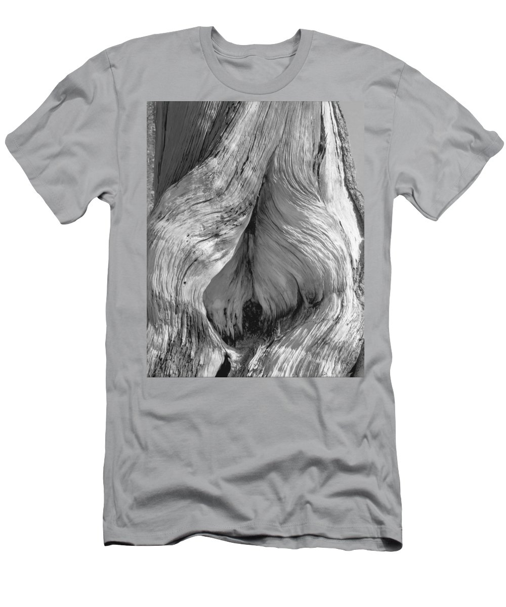 Tree Men's T-Shirt (Athletic Fit) featuring the photograph Pine, Split Trunk, Sierra Nevada Mountains, Ca by Scott Griswold