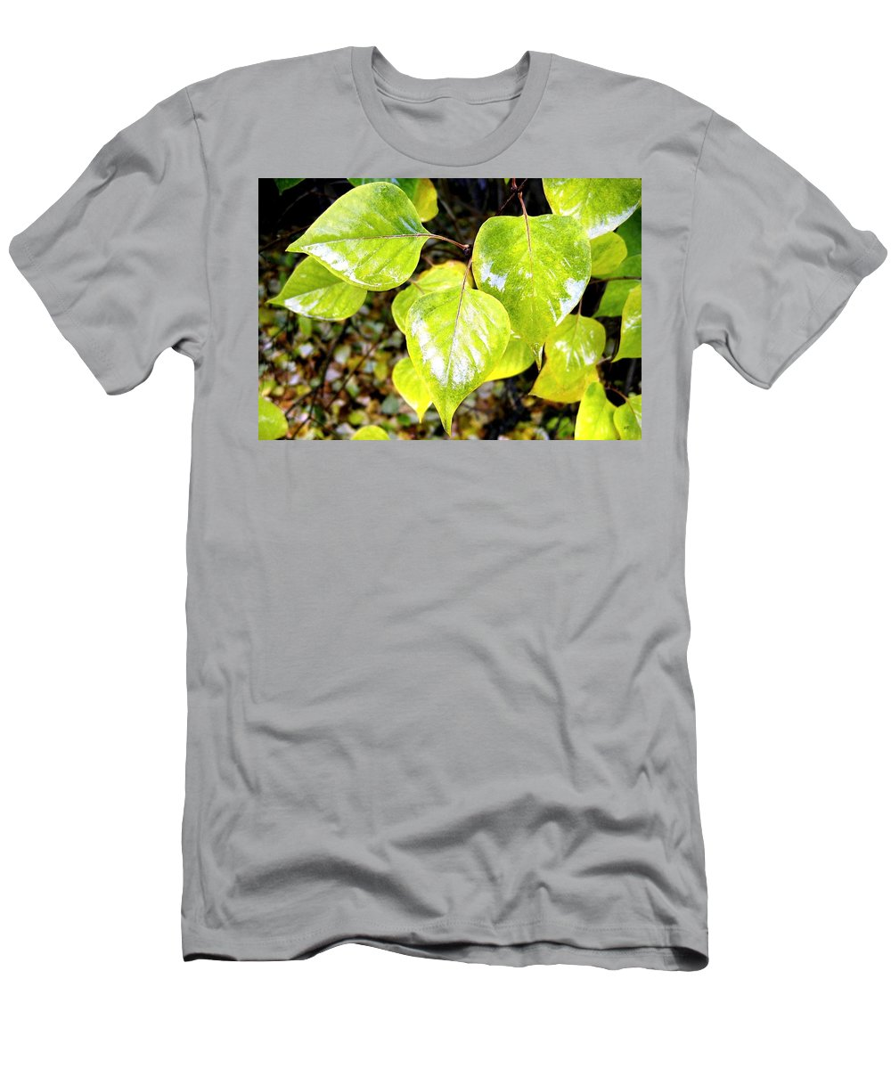 Autumn Men's T-Shirt (Athletic Fit) featuring the photograph Rain On The Fall Lilac by Will Borden
