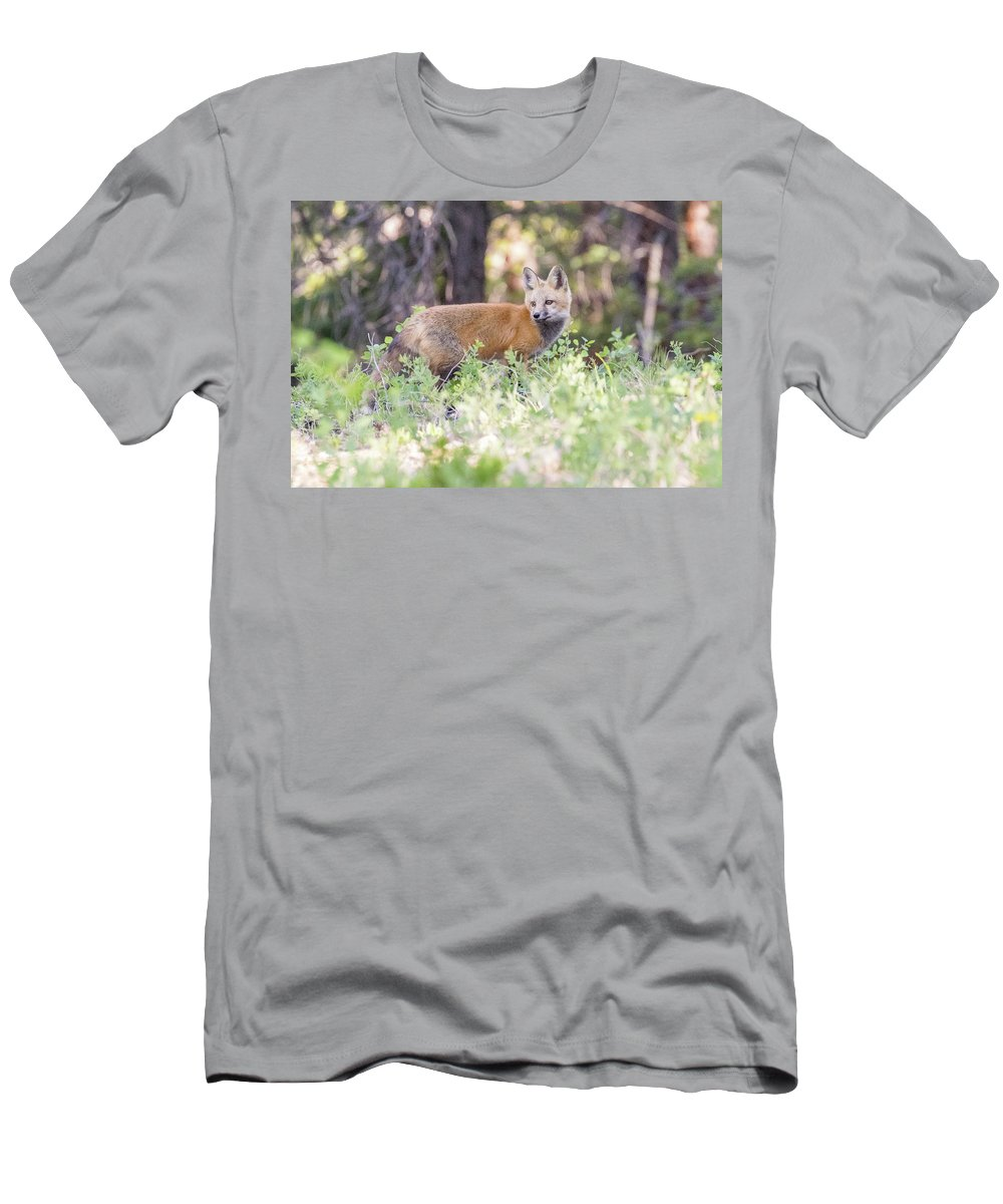 Fox Men's T-Shirt (Athletic Fit) featuring the photograph Red Fox Kit Looking For Mom by Tony Hake