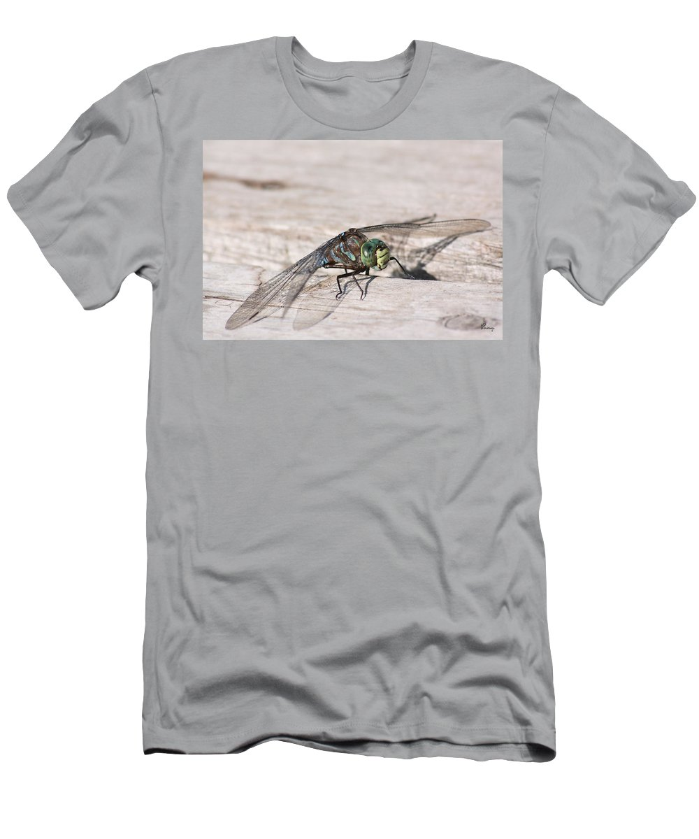Dragonfly Nature Bug Flying Insect Wings Eyes Colorful Creature Men's T-Shirt (Athletic Fit) featuring the photograph Rescued Dragonfly by Andrea Lawrence
