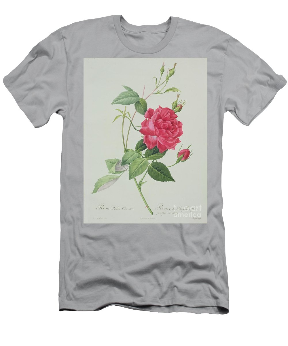 Red Men's T-Shirt (Athletic Fit) featuring the drawing Rosa Indica Cruenta by Pierre Joseph Redoute
