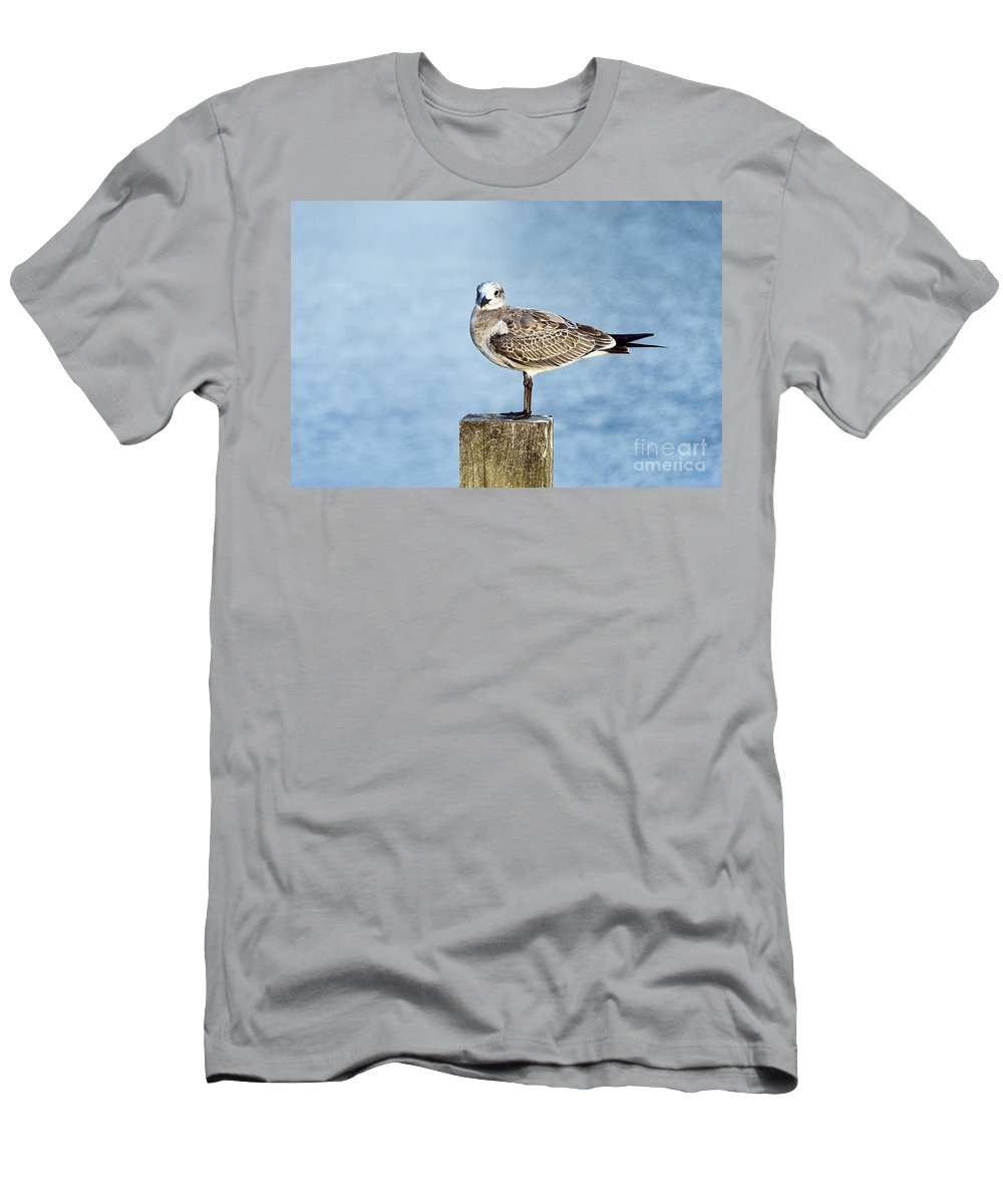 Corolla Men's T-Shirt (Athletic Fit) featuring the photograph Shorebird by John Greim
