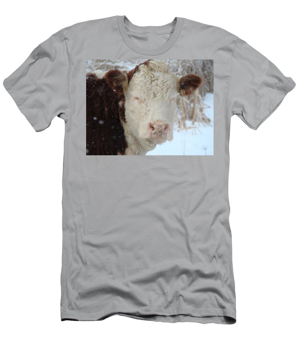 Winter Men's T-Shirt (Athletic Fit) featuring the photograph Sleepy Winter Cow by Gothicrow Images