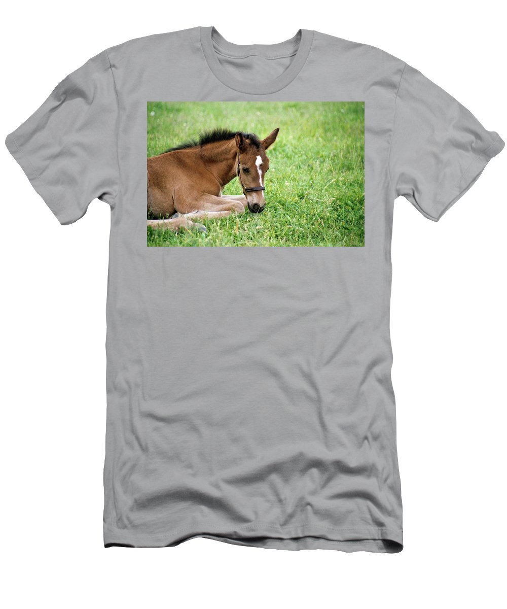 Horse Men's T-Shirt (Athletic Fit) featuring the photograph Sleepy Foal by Alynne Landers