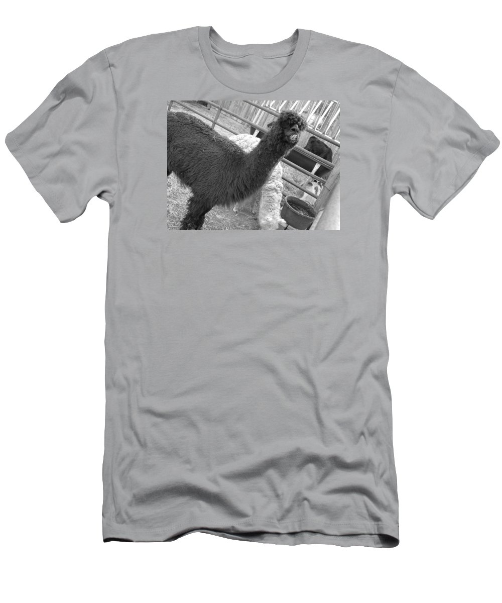 Llama Men's T-Shirt (Athletic Fit) featuring the photograph Smile by Doug Hansen