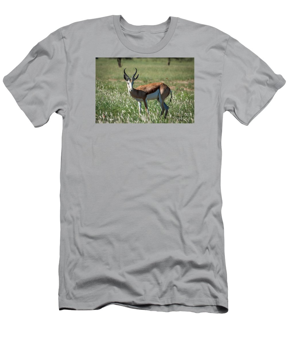Action Men's T-Shirt (Athletic Fit) featuring the photograph Springbuck And Butterfly by Stephan Olivier